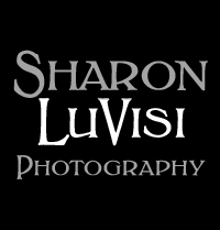 Sharon LuVisi Photography